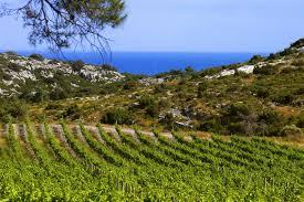 Fitou vin Aude Languedoc Roussillon