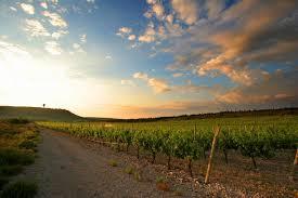 vin de l'Aude Corbières