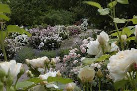 jardin Limoux