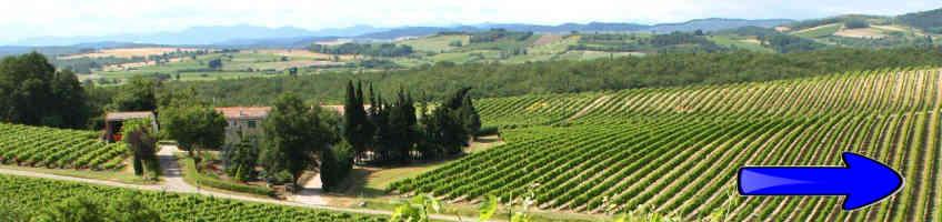 camping proche des vignobles de la région languedoc roussillon
